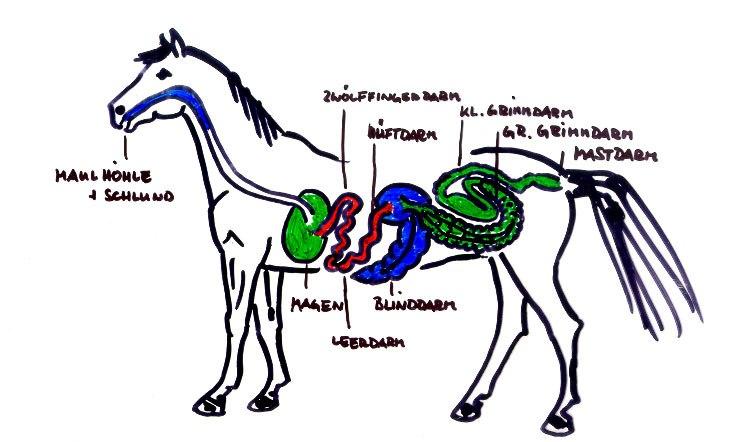 Die Verdauung des Pferdes   Dr. Susanne Weyrauch