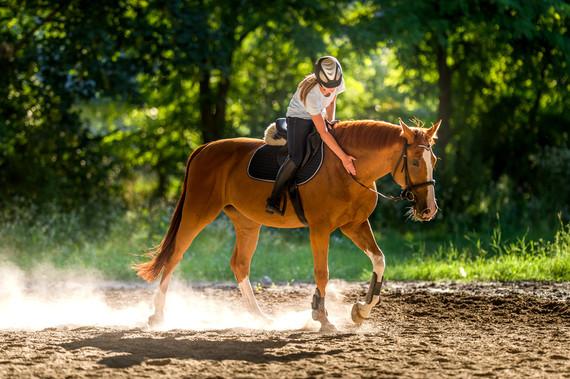 Arthrose Beim Pferd Dr Susanne Weyrauch