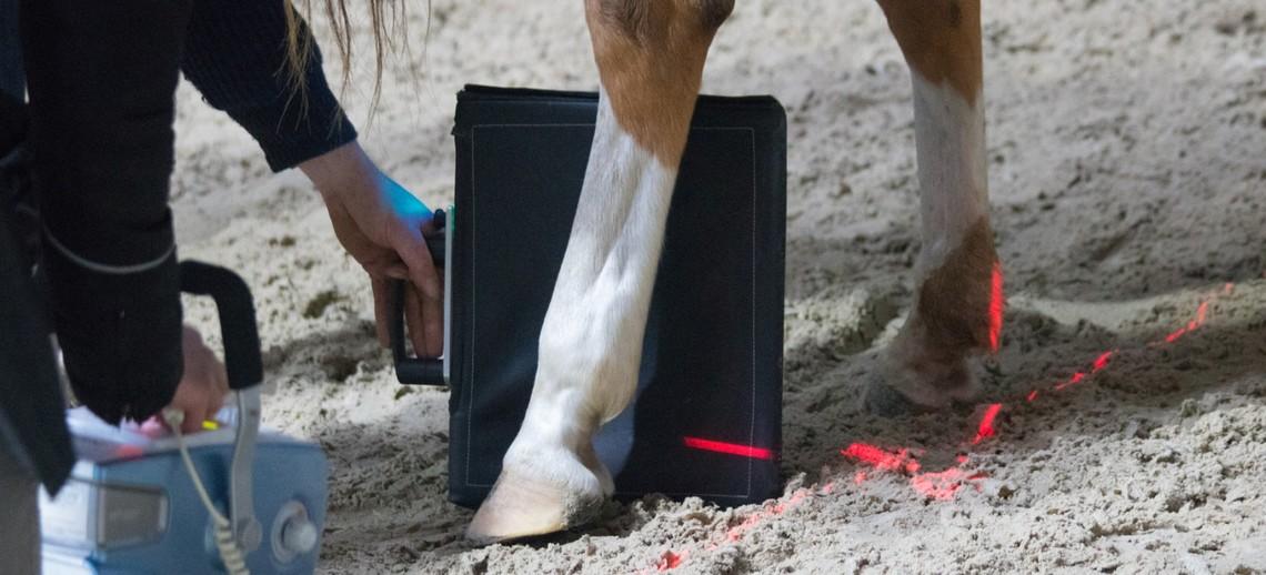 Arthritis bei Pferden